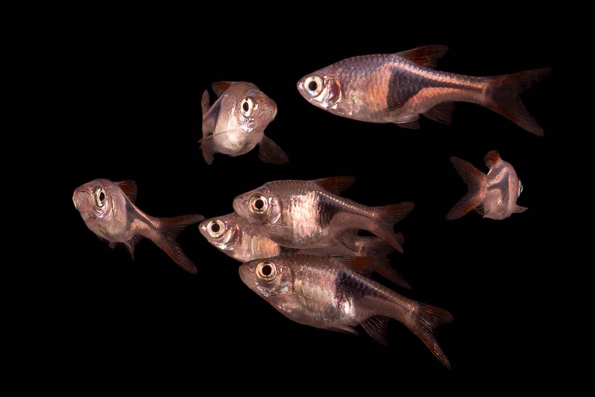 Great Beginner Fish For Small Aquariums