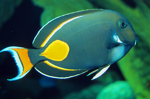 Achilles Tang Care Achilles Tang Med