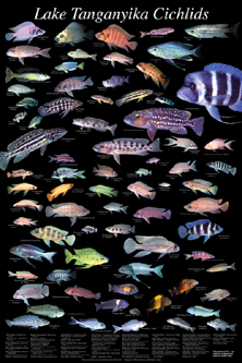 fish wallpaper hd